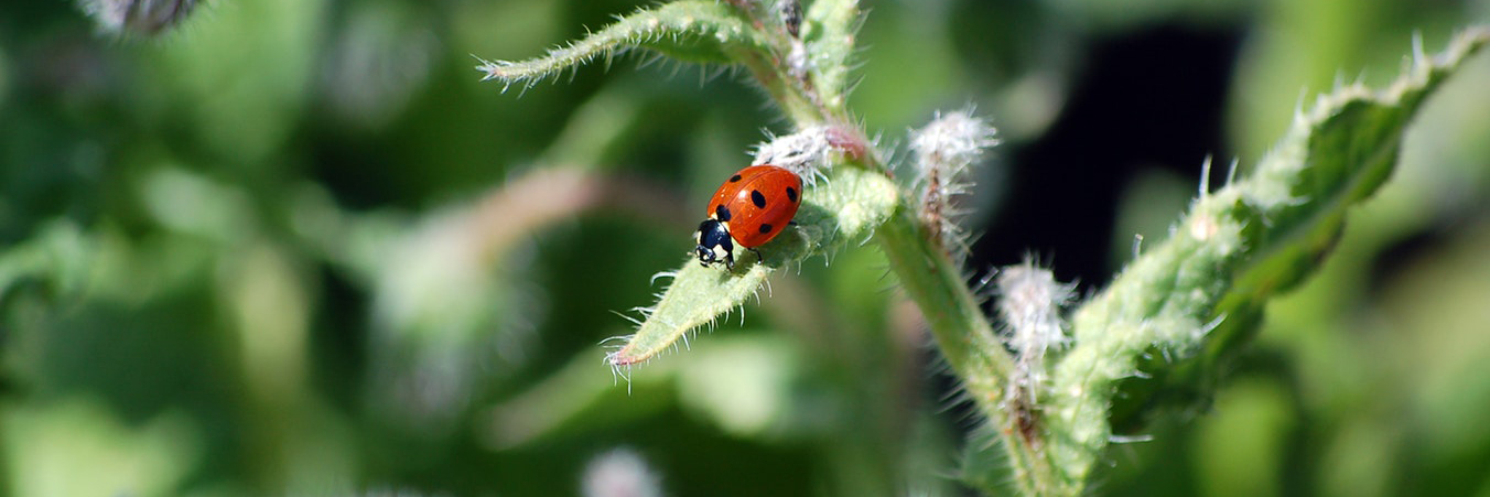 Lady Bug Pest Control | organic pest control in Montrose, Colorado