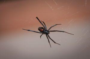 spider exterminator montrose co